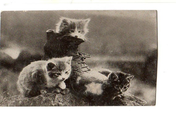 Kittens in Boot  Nice English Cat Postcard
