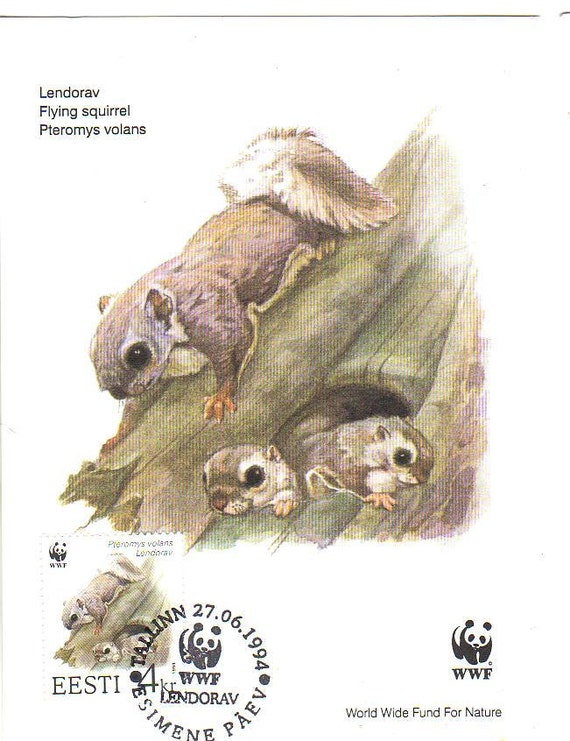 Estonia Maxi card, WWF, Flying squirrels postcard, A