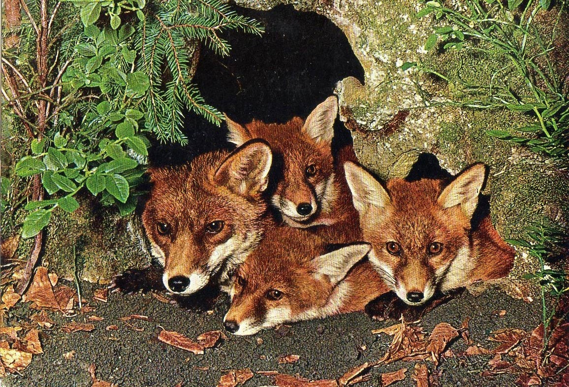 Like this item Cute Fox Cubs