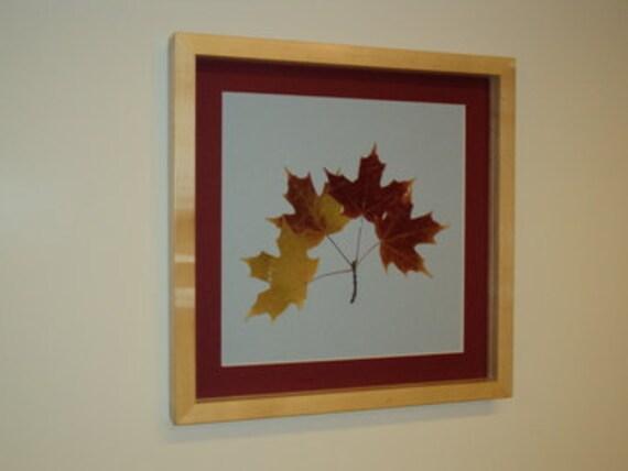 Framed Botanical - Autumnal Real Sugar Maple Tree Leaves