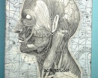 ARTWORK. Double Sided Art. Mr. Universe