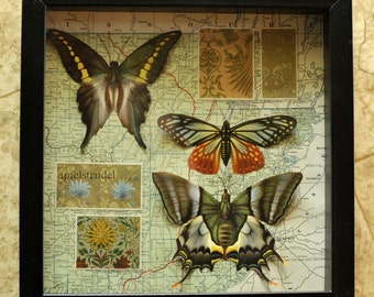 RECYCLED MAPART. Tropical Butterflies on 1923 Tennessee Map in Shadow Box Frame
