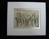 Pressed Flower Picture, Field of White Salvia and Queen Anne Lace