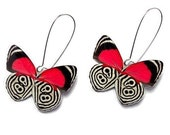 Real Butterfly Wing Earrings (Whole Diaethria Clymena aka The 88 Butterfly  - WE001)