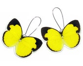Real Butterfly Wing Earrings (WHOLE Eureme Species - Small Yellow Dainty Sulphur- WE006)