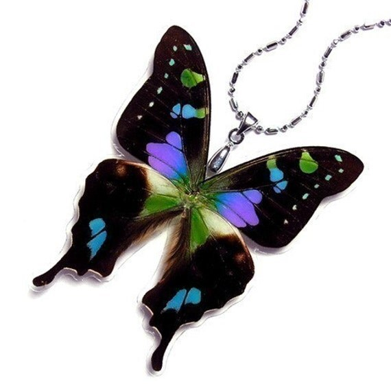 BUY 2 GET 1 FREE - REAL BUTTERFLY WING Necklace \/ Pendant (WHOLE Graphium Weiskei Purple Spotted Butterfly - W019)