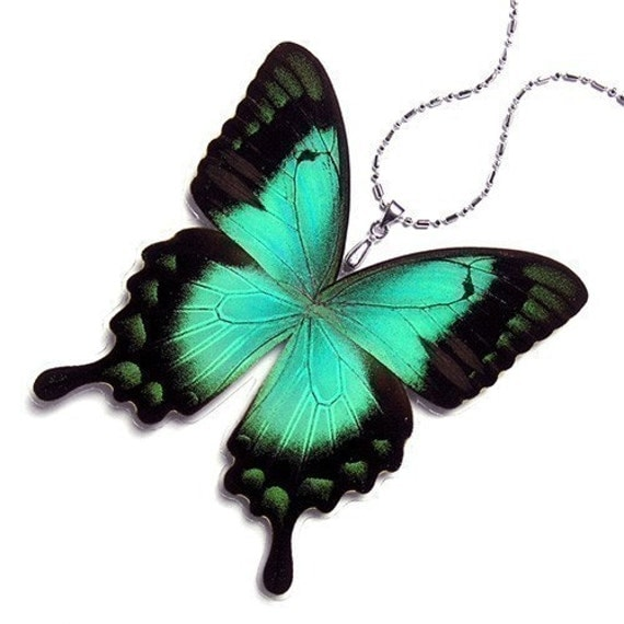 Real Butterfly Wing Necklace / Pendant (WHOLE Green Papilio Lorquinianus Butterfly - W014)