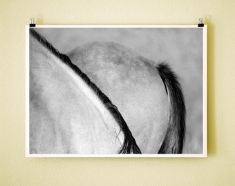 MANE AND TAIL - 8x10 Signed Fine Art Photograph