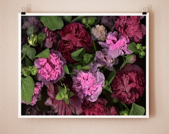 HOLLYHOCK - 8x10 Signed Fine Art Photograph