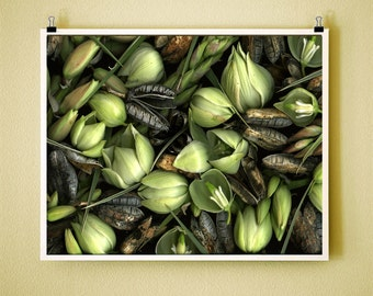 YUCCA - 8x10 Signed Fine Art Photograph