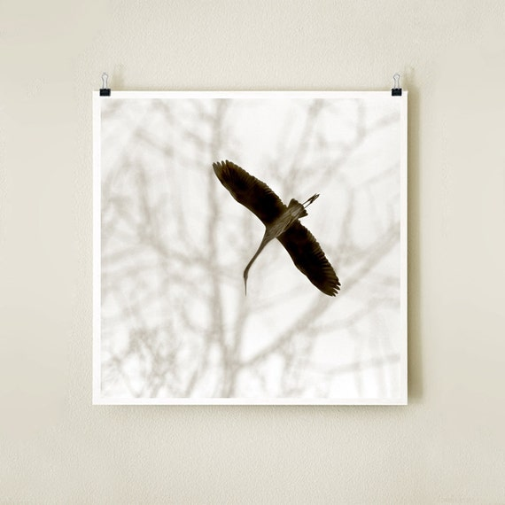 HERON GLIDE - Sepia - 8x8 Signed Fine Art Photograph
