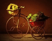 Still Life Photography, brown, red, bicycle, Flower Cart whimsical fine art photography print 8x10