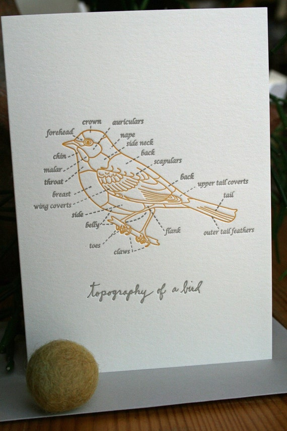 topography of a bird letterpress card