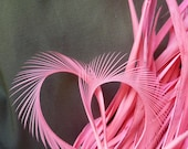 GOOSE BIOT FEATHERS / Flamingo Coral Pink  / 728