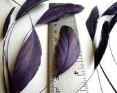 STRIPPED COQUE TAIL / Dark Plum, Aubergine, Wild Berry   /  1139