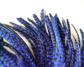 COQUE TAIL FEATHER Loose , Grizzly Striped Cobalt Blue  /  163