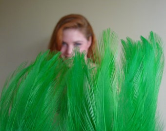 COQUE HACKLE , Exclusive Quality  / Shamrock Green  / 112