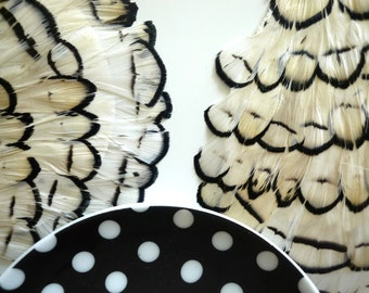 FEATHER PAD White Lady Amherst /67