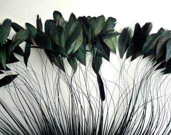 STRIPPED COQUE TAIL Iridescent Stripped Feathers / Darkest Black / 1148/Rollback