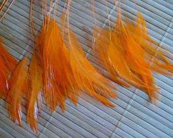 STRIPPED COQUE HACKLE / Carrot Orange  / 1153