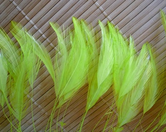 STRIPPED COQUE HACKLE / Shocking lime green   / 1155