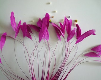 STRIPPED COQUE FEATHER /  Begonia,True Fuchsia  / 1142