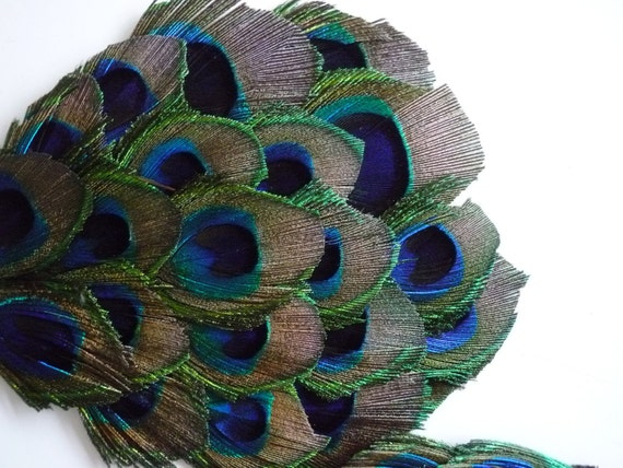 FEATHER PADS Peacock Eye Feather / 106
