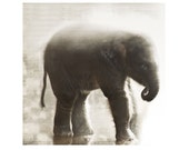 Elephant In The Mists Fine Art Photograph Sepia Baby Animal Asian Calf Nature Wildlife Print Safari Vintage Style
