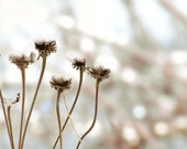 Botanical Photograph Wonderland Winter Flower Gray Sepia Dreamy Snow Nature Floral Minimalist