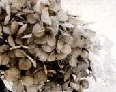 Flower Fine Art Photograph Vintage Hydrangea Sepia Black White Nature Wedding Decor