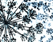 Winter Art Blue Snowflake Photograph Abstract Snow Navy White Nature Decor