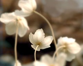 Wall Art Flower Photograph Until There Was You Brown White Neutral Decor Nature Garden Dreamy