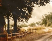 Country Lane Fine Art Photograph Fence Tree Decor Rustic Sepia Vintage Style
