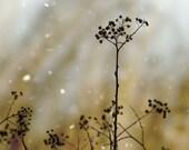 Botanical Fine Art Photograph Magic Winter Decor Flower Silhouette Dreamy Garden Nature Floral Minimalist