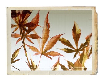 Photograph Vintage Autumn Leaves Fine Art Nature Leaf Fall Orange Rust Maple Russet