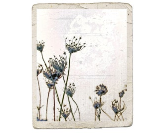 Indigo Prairie Song Fine Art Nature Photograph Seed Blue Flower Dreamy White Vintage Style