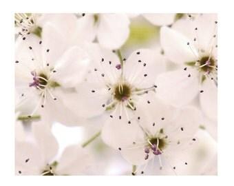 White Flower Photograph Sprinkle Of Fairy Dust Flowers Ivory Blossoms Green Purple Spring Dreamy Print Garden