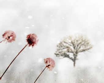 Pink and Gray Winter Photograph Winter's Fairytale Snow Tree Dreamy Nature Decor Print Botanical Flower