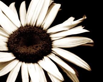 Flower Art Photograph Faith Sepia Black White Daisy Nature Wedding Decor Minimalist