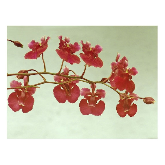 Flower Print Photograph Red Orchids Floral Gray Minimalist Pink Branch Fine Art Vintage Style Nature