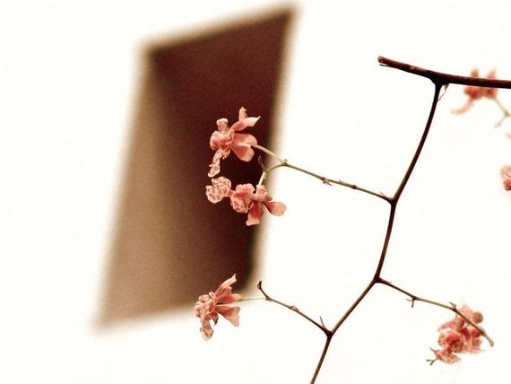 Pink Orchid Window Photograph Blush Of Dawn Flower Dreamy Minimalist Decor Print Botanical