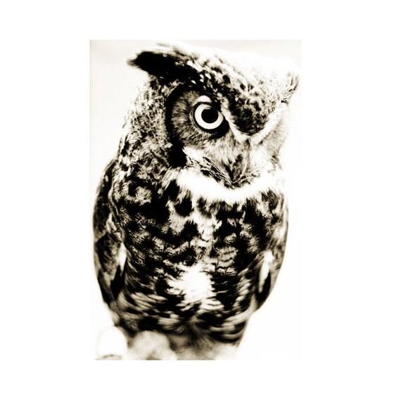 Great Horned Owl Fine Art Photograph Bird Sepia Wildlife Nature Print