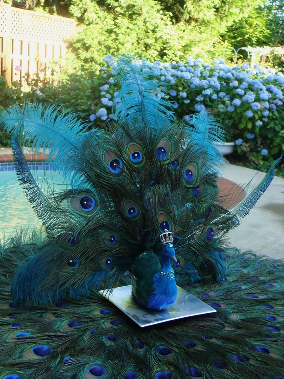 His Royal Majesty peacock wedding decoration
