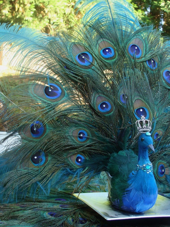 FINAL PAYMENT Peacock Feather Wedding Package or NubianButterfly2 06-12
