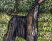 A Little Lordly - Afghan Hound Dog Art Print
