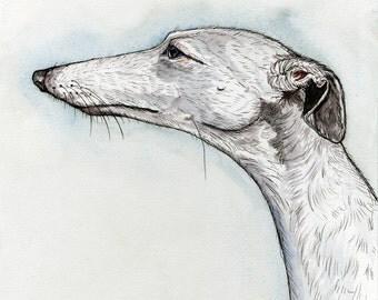 A Little Purity - Whippet Dog Art Print