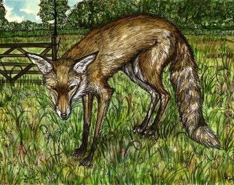 The Friendly Little Fox - Art Print