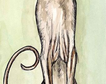 A Little Curiosity - Sphynx Cat Art print