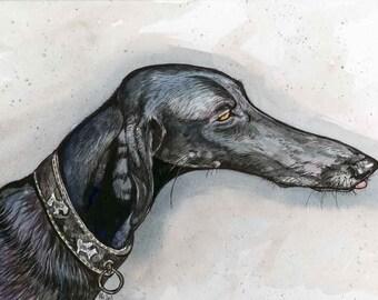Galgo Art Hound art Dog Print