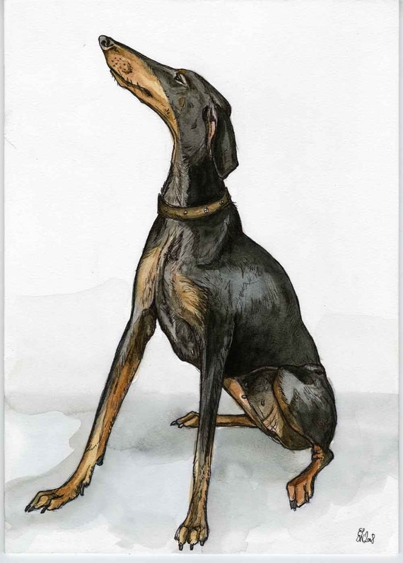 A Little Prowess - Doberman Dog Art Print